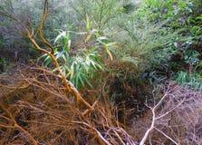 Depósito mineral alaranjado em árvores fotos de stock