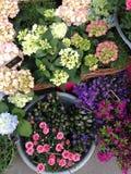 Departamento de flor Foto de archivo libre de regalías
