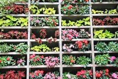 Departamento de flor Fotografía de archivo