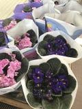 Departamento de flor Las flores brillantes y las plantas verdes se colocan embaladas en potes en estantes y bandejas en la tienda Foto de archivo