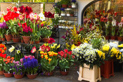 Departamento de florista con las flores coloridas del resorte Foto de archivo