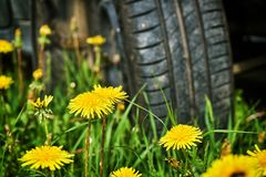 Departure by car in the countryside. Car wheel standing on the green grass with yellow dandelians. Tire service concept. Traveling concept stock image