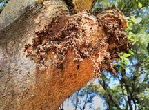 Dependente da árvore foto de stock