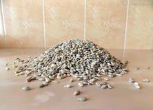 Dry barley porridge on the table royalty free stock image