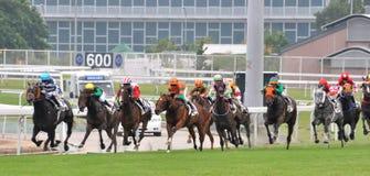 Deporte de la carrera de caballos Foto de archivo libre de regalías