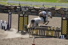 Deporte de salto del caballo Imágenes de archivo libres de regalías