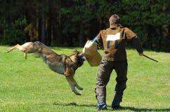 Deporte del perro imagen de archivo