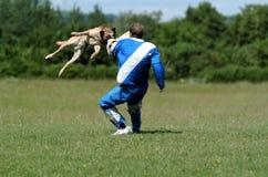 Deporte del perro Foto de archivo