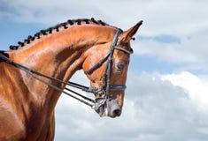Deporte ecuestre - cabeza de la doma del caballo del alazán fotos de archivo