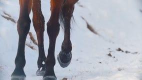 Deporte ecuestre - enganches de un caballo que galopa en campo nevoso almacen de metraje de vídeo