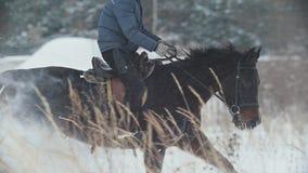 Deporte ecuestre - jinete en el caballo rojo que galopa en campo nevoso metrajes