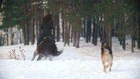 Deporte ecuestre - mujer de pelo largo hermosa que monta un caballo negro a través de las derivas profundas en el bosque nevoso almacen de video