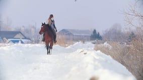Deporte ecuestre - mujer del jinete en el caballo que camina en al aire libre nevoso y que mira al pájaro en cielo almacen de video