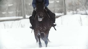 Deporte ecuestre - un caballo que camina en campo nevoso durante snawfall almacen de metraje de vídeo