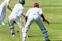 Depositário do wicket do batedor do jogador da ação do grilo Imagens de Stock