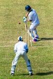 Depositário do wicket do batedor da ação do jogo do grilo Imagem de Stock Royalty Free