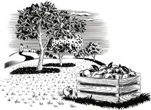 Deposit apples in an orchard landscape. Deposit apples in an orchard landscape leaning against a flor Stock Photos