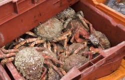 Deposit caught crabs Stock Photography