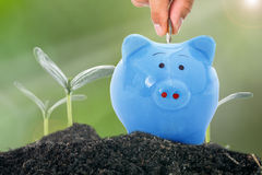 Deposit money to piggy bank Royalty Free Stock Images