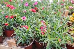Deposito del giardino di fiori Fotografia Stock Libera da Diritti