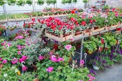 Deposito del giardino di fiori Immagini Stock Libere da Diritti