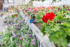 Deposito del giardino di fiori Immagine Stock Libera da Diritti