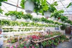 Deposito del giardino di fiori Fotografia Stock