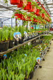 Deposito del giardino e della casa in primavera Fotografia Stock Libera da Diritti