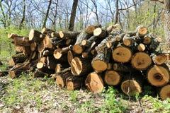 Deposito di legno del ceppo Immagini Stock