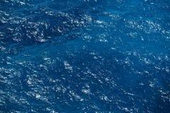 Depp Blaumeer Stockbilder