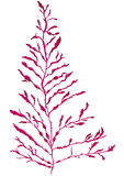 Depper-dulse Meerespflanze Stockbild