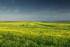 deppighet clouds grönt skyvete för fältet Fotografering för Bildbyråer