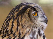 Depredador con alas Imagenes de archivo