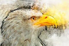 Depredador del símbolo de la pintura de la acuarela del pájaro de Eagle América Fotos de archivo