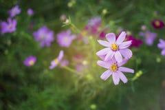 Depresja klucz różowy kosmosu ogród obrazy stock