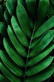 Depresja klucza zieleni liście fotografia stock