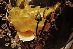 DEPRESJA KLUCZOWY wizerunek kolor żółty róża W wodzie obraz stock