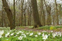 Depresja strzał ochraniający teren Zarabia Holz blisko Loissin, Mecklenburg-Vorpommern, Niemcy Fotografia Royalty Free