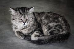 Depress face cat Stock Photo