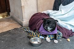 A depressed dog lying alone on the street feeling anxious and lonely in sleeping bag and waiting for food. The concept of. Homelessness, uselessness and royalty free stock photo
