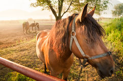 Depressed horse Stock Images