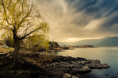 Depressed Lake. A tree by the shore of a Lake Kawaguchiko in a depressed mood Royalty Free Stock Images