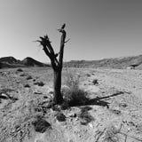 Depressie en leegte in zwart-wit stock afbeelding