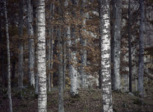Depressing autumn forest Royalty Free Stock Photos