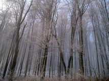 Depressing of Forest. We were on a field trip in the deep of winter Royalty Free Stock Photography