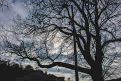 A depressing lonely leafless tree royalty free stock image