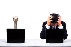 Depression businessman. Work with Ostrich partner stock images