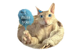 Depression. I miss you. A pink cat with blue eyes full of tears is depressed. In the paw, he holds the inscription: I miss you royalty free illustration