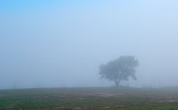 depression Lonely tree in fog  Royalty Free Stock Photography