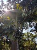 Depressione del sole la giungla Shri Lanka Immagini Stock Libere da Diritti